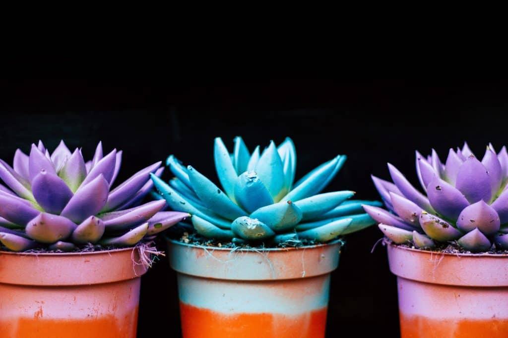 Recycling Plastic Flower Pots