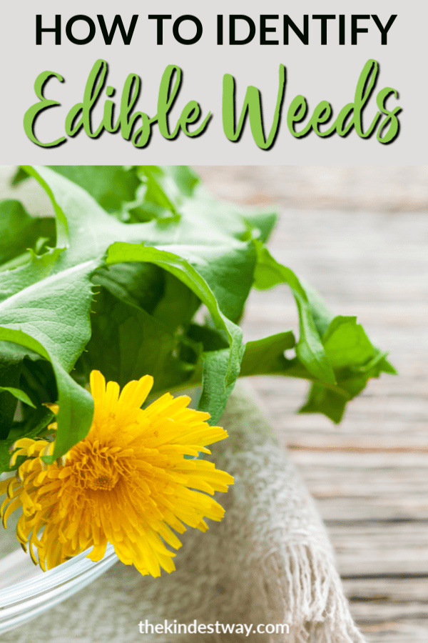 Did you know there are many different types of edible weeds in your yard? Read how to identify the weeds that are edible, and what to use them for! #weeds #gardening #edibleweeds #yard