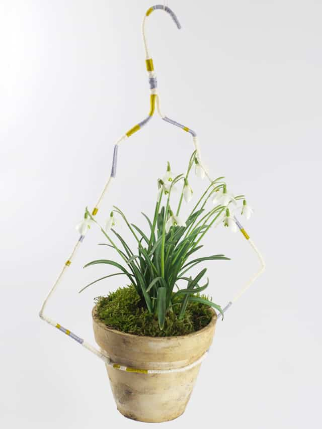 Recycle wire hanger into plant hanger.
